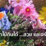 ดอกไม้กินได้ …สวย และอร่อย